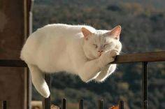 Resting  Cats from Foto World foto świat