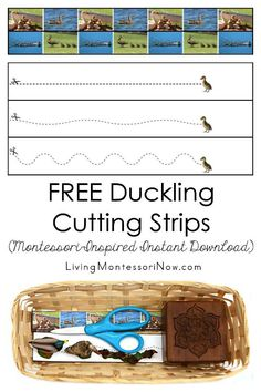 Free duckling printables and Montessori-inspired duckling activities for multiple ages; perfect for home or classroom; great for a duckling unit, bird unit, spring unit, or literature-based unit Cutting Activities, Fine Motor Activities For Kids, Toddler Learning Activities, Montessori Toddler, Montessori Activities, Montessori Homeschool, Toddler Preschool, Physical Activities, Dementia Activities