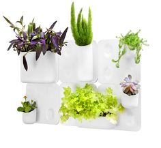 Bring a lot of green and organization into your space with our Big Happy Family, our best-selling kit!