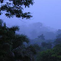 Democratic Republic of the Congo, Okapi Wildlife Reserve