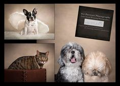 Book a Photo session for your best four-legged friend with International Award Winning Photographer! #palmbeachgardens #palmbeach #westpalmbeach For more information, Call Vasi Studio at 561.307.9875 or droop an e-mail to: info@vasistudio.com #petsphotography #petsportrait #dog #familyphotographer #petphotographer