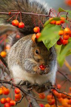 Esquilo comendo frutinhas!