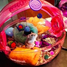 Just look at this dude with his spherical dreamland. | 16 Hamsters Livin' The Freaking Dream