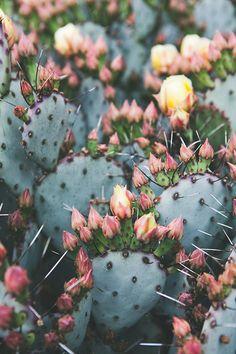 Cactus Photography Bohemian Print Southwest by wanderlustography