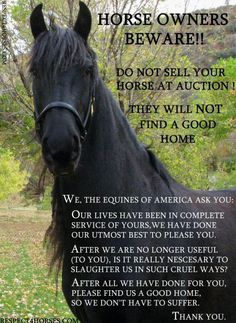 If you've gotta sell, use a binding contract. It is wayyy too easy for a horse to be shuffled around really quickly, and in a few weeks be across the border and slaughtered. Registration papers don't protect... contracts do.