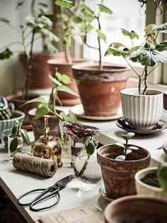 indoor growth Debra/of botanical ink Indoor Garden, Indoor Plants, Outdoor Gardens, Ivy Plants, Garden Plants, Vegetable Garden, Ivy House, Plant Decor, Garden Inspiration