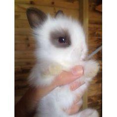 Kaniner er søde