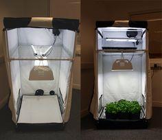 Growing Weed Indoors the Easy Way - Best Seed Bank #SEMILLAS #MARIHUANA #PEPITA #SEEDS