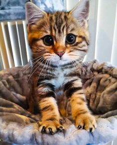 Supper Cute Baby Kittens In The World Doing Funny Things Aww Baby Cats Kittens Cutest Baby, Cute Cats And Kittens, Baby Cats, Funny Kitties, Funny Dogs, Beau Film, Matou, Photo Chat, Owning A Cat