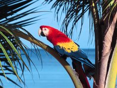 Download Pictures Exotic Birds Wallpaper 1600x1200 | Full HD ...