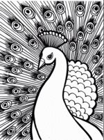 peacock bird coloring pages