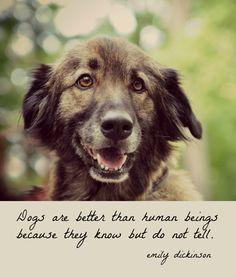 Dog Quote Emily Dickinson Art Print