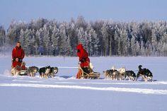 sneeuwscootersafari yllas - Google zoeken