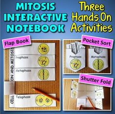 Mitosis Interactive Notebook - 3 Hands On Activities! from Tangstar Science on TeachersNotebook.com -  (30 pages)  - These three mitosis activities for interactive notebooks will help your students understand mitosis inside and out.