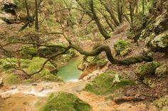Trekking Excursion:Es Salt des Freu Waterfall. Need to go to Buynola, then head to Alaró. #Mallorca. Spain