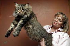 Blyth big cat Lioncubb proves he's the top cat - Chronicle Live