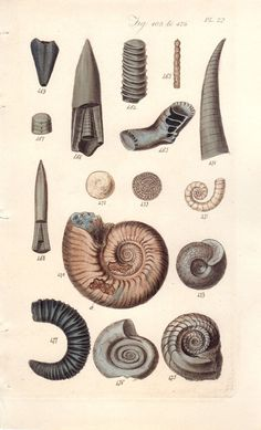 1852 Antique Shell Print Beach Decor Sea Life Ocean Marine Hand Colored Engraving