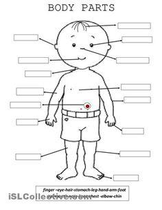 resultado de imagen de parts of the body