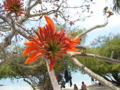 #thailand #kohtao #beach #sea #flower #tree #summer #holiday