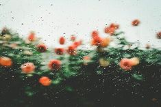 flowers, rain, and nature image Indie, All Nature, Flower Aesthetic, Mellow Yellow, Miraculous Ladybug, Rainy Days, Planting Flowers, Artsy, Just For You