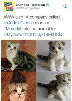 It happened. They made a Meredith stuffed animal! Taylor Swift Fan Club, Taylor Swift Funny, Taylor Alison Swift, Meredith Swift, Meredith Grey, Huge Dogs, Olivia Benson, Pretty Cats, Detective