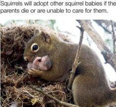 Cute Little Animals, Cute Funny Animals, Funny Cute, Hilarious, Amazing Animals, Animals Beautiful, Animal Pictures, Funny Pictures, Baby Pictures