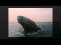 Huellas, ellas y ballenas 2002 -2012