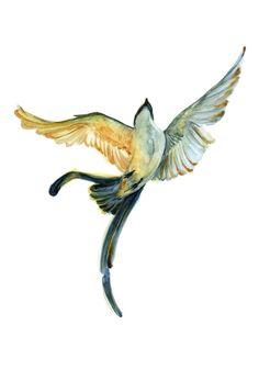 swallow, schwalbe, bird, birds, watercolor, painting, drawing, kirasene, falling bird, vogel, vögel