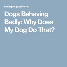 Dogs Behaving Badly: Why Does My Dog Do That?
