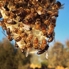 Natural comb and honey bees.