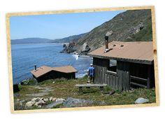 Cabin Campgrounds California | Cabin Camping in California - Steep Ravine - Big Basin - The Lure ...
