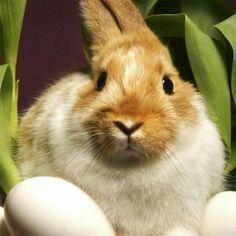 Cute pretty rabbit