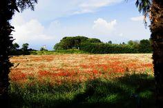 Die Via Francigena - Monterosi. La Via Francigena - Monterosi.  The Via Francigena - Monterosi. A Via Francigena - Monterosi. near Relax in Piazzetta Home holidays Trevignano Romano - Italy