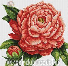 Gallery.ru / Фото #17 - Цветы - 1111111a