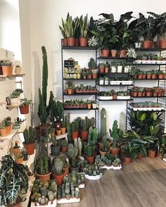 Our is open all this week from - perfect for those last minute gifts Cacti And Succulents, Planting Succulents, Cactus Plants, Garden Plants, Planting Flowers, Indoor Garden, Home And Garden, Plants Are Friends, Cactus Y Suculentas