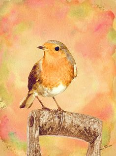 English Robin  blank greetings card  thank you card  by Iain S Byrne, £1.80
