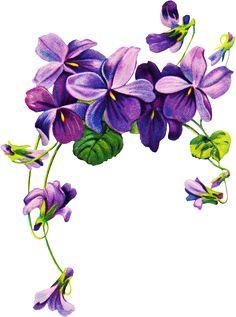 african violets border clip art | Free vintage Violet graphics