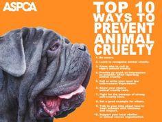 Go Orange to raise awareness... fight animal abuse!