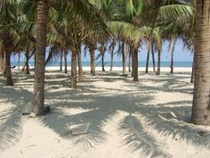 Vietnam is famous for possessing many beautiful beaches . Each beach has its own attraction. That's why beaches in Vietnam are highly appre. Hoi An, Laos, Hollywood Beach, Travel Magazines, Beach Tops, Vietnam Travel, Ocean Beach, Day Tours, Beautiful Beaches