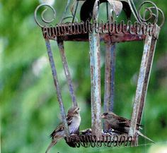 Bird feeder made from old light fixtures