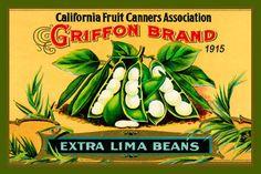 Olde America Antiques | Quilt Blocks | National Parks | Bozeman Montana : Vegetables - Griffon Lima Beans