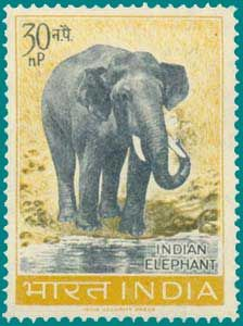 Indian Elephant Stamp