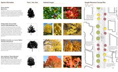 plant palette landscape architecture - Google Search