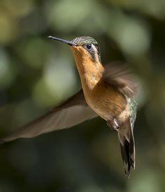 Humming Bird by Paul Haddon