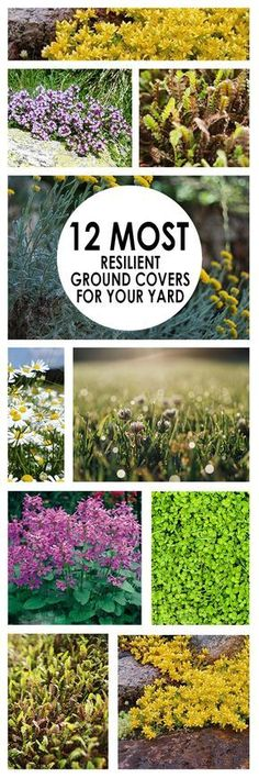 12 Most Resilient Ground Covers For Your Yard Ground cover ideas plants for ground cover popular pin gardening ground cover options outdoor living landscaping ideas The post 12 Most Resilient Ground Covers For Your Yard appeared first on Outdoor Ideas. Outdoor Plants, Garden Plants, Outdoor Gardens, Roses Garden, Herb Garden, House Plants, Organic Gardening, Gardening Tips, Vegetable Gardening