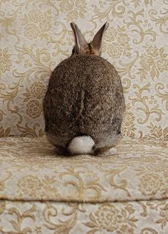 Bunny Cottage / brown tan cream white