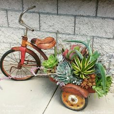 Succulents decorate an old tricycle.