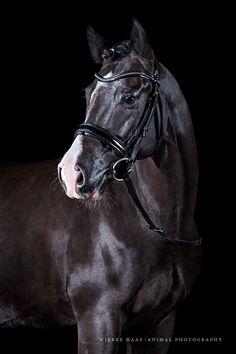 Wiebke Haas | animal photography » Robin