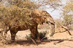 pic from makadaka flickr....elephant drinking water