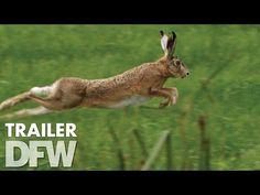 Holland - Natuur in de Delta trailer - YouTube